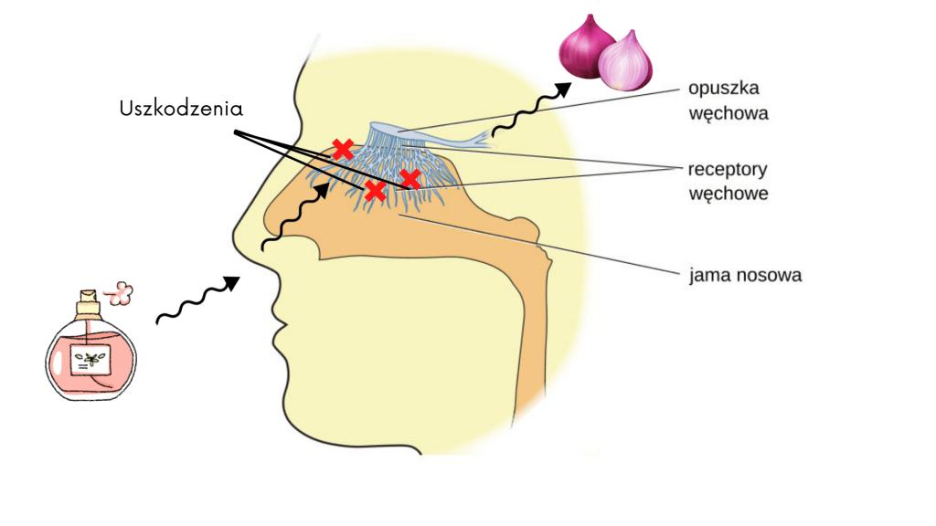 Uszkodzony nerw węchowy wszystko śmierdzi